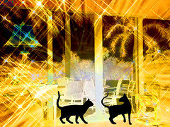In the Spotlight (soniaadammurray - On & Off) Tags: digitalphotography manipulated experimental collage abstract picmonkey spotlight cats pets home interior exterior trees golden light artchallenge nighttime chairs windows doors hss sliderssunday