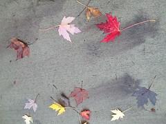 11-05-17 Dayton 62 leaves, fall color (Chicagoan in Ohio) Tags: dayton clouds sun sunhalo leaves fallcolor