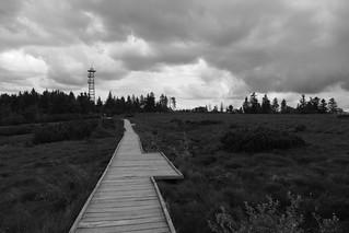 way through the raised bog