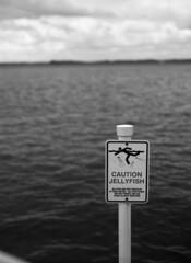 Caution Jellyfish (Ian David Blüm) Tags: cambridge maryland chesapeake bay sign signage typography lettering mamiya 645 protl 120 fuji across medium format negative film