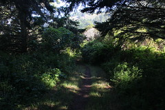 The trail ducks into a deeply shaded forest (rozoneill) Tags: point reyes national seashore bay area golden gate san francisco california coast trail hiking backpacking phillip burton