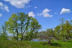 Glade and Volga (МирославСтаменов) Tags: russia zhiguli mogutova glade meadow hawthorn linden maple oak sky cloudscape