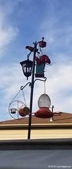 Lisa Higginson - Feeder Station with Baltimore Oriole (2) (WBU Barrie) Tags: wbubarrie wildbirdsunlimited wildlife birds birdfeeding barrie birdfeeders birding backyardbird simcoecounty feeder