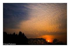 DSCF7235 (kouji fujiwara) Tags: sunrise morning glow morningglow fujifilm fujifilmxpro2 xpro2 fujinon xf23mmf14 xf23mm f14