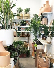 Spent a good part of yesterday at the storefront reorganizing & reimagining the storefronts shelves between customers. It's the best creative exercise I know to help invite in new ideas. #thezensucculent (The ZEN Succulent) Tags: the zen succulent terrarium instagram