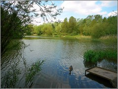 Tranquility of Rural Life .. (** Janets Photos **) Tags: uk hull bransholme naturereserves lakes eastyorkshire tranquility nature
