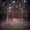 Lüneburger Heide (somekeepsakes) Tags: lomographycn100 square lomography deutschland lomolca120 europa mediumformat 6x6 germany lüneburgerheide lomocn100 2016 film analogue mittelformat outdoor quadratisch nature natur lomo europe analog 120