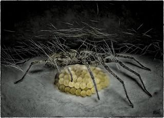 Spinne beschützt Ihre Eier