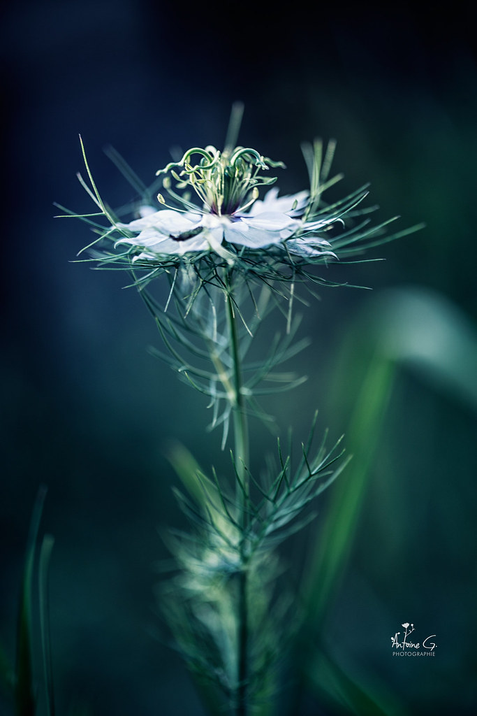 The World S Best Photos Of Damas And Fleur Flickr Hive Mind
