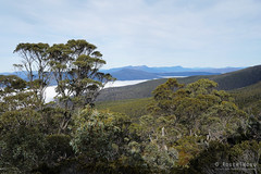 20180527-12-Above cloud layer (Roger T Wong) Tags: 2018 australia mtfield mtfieldeast np nationalpark rogertwong sel2470z sony2470 sonya7iii sonyalpha7iii sonyfe2470mmf4zaosscarlzeissvariotessart sonyilce7m3 tasmania bushwalk clouds mountains outdoors tramp trees trek walk