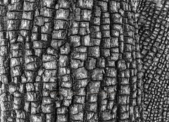 Alligator Bark (chasingthelight10) Tags: events photography travel landscapes canyons rockformations places arizona sedona boyntoncanyon otherkeywords abstract closeups detail things alligatorbarkjuniper