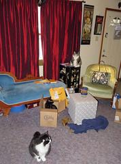 Three cats marginally arranged (benchilada) Tags: three cats marginally arranged george nemo nadine box parlour parlor kitties