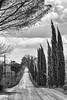 The path (SLpixeLS) Tags: italy italie tuscany toscane toscana landscape paysage tree arbre cypress cyprès sky ciel track chemin blackandwhite noiretblanc art