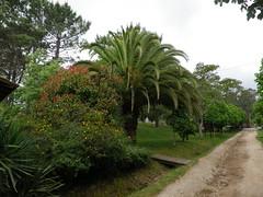 Vegetación en el parque de San roque de Ribeira(Coruña-España) (Los colores del Barbanza) Tags: vegetación parque de san roque végétation barbanza coruña galicia españa