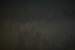 Forêt noire (Samuel Raison) Tags: forêt brumes brume ombre sombre dark hautsplateauxduvercors vercors nikon nikond800 nikon4200400mmafsgvr