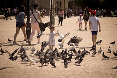 Birds [2] (Kristen Palatella) Tags: paris france parisian bird birds pigeon girl littlegirl young play fun fly flying motion inmotion wings notredame pigeons playing