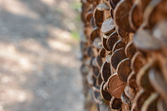 Coins in trees, Tarn hows (Andy Jah) Tags: tree coins selectivefocus nature money closeup wood finance