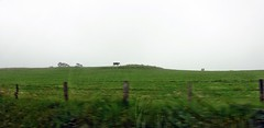 Eifellandschaft (mama knipst!) Tags: eifel landschaft kuh cow nebel fog juni