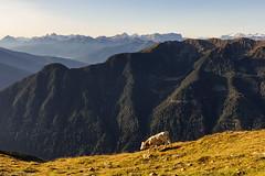 Passeggiatina in cresta (cesco.pb) Tags: valleaurina speikboden sudtirol altoadige alps alpi canon canoneos60d tamronsp1750mmf28xrdiiivcld italia italy montagna mountains