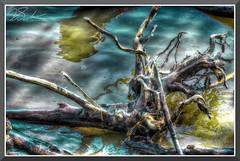 DriftWood_9586d (bjarne.winkler) Tags: driftwood found folsom lake