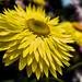 OnePlus 6 Flower 2