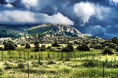 Adversities Of Nature... (Constantinos_A) Tags: sony alpha a6300 sky field mountain tree soil bushes clouds storm green yellow blue nature landscape outdoors trikala peloponnese mountainside dirt greece