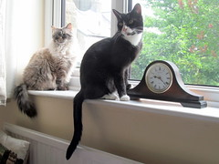 Did someone mention breakfast? (kingsway john) Tags: cats window clock blueberry bluebell pets black white