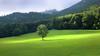 A sunbeam on a rainy day (rotraud_71) Tags: bavaria berchtesgadenerland badreichenhall nonn forest mountains tree sunbeam meadow spring sun shadows