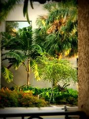 Burns Square Sarasota (soniaadammurray - On & Off) Tags: iphone burnssquare trees window reflections shadows light sarasota florida usa exterior artchallenge
