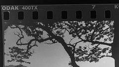 Test (Ojo de Piedra) Tags: 35mmfilm negativefilm monochrome blackwhite trix400 nikonf100 film kodak