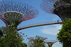 P1020543 (Maharepa) Tags: singapore singapur architecture architektur gardens trees bay