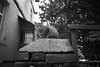 (ニノ Nino) Tags: ilford delta 400 cat stray feline cats street urban gato kitty kittens black white sofia bulgaria 35mm film 35 mm olympus mju ii