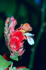 _0220518 (glezygber) Tags: ygonikon flower flora nature bioencuadre bioencuadre2018 nikondx nikongears nikkor macro portrait