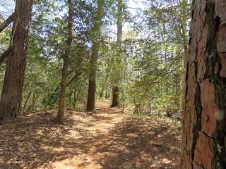 Bald Cypress Trail