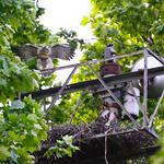 GT Hawk Nest - 0600 thumbnail