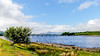 Trawsfynydd Wales 2nd June 2018 (boddle (Steve Hart)) Tags: wild wilds wildlife life nature natural bird birds flowers flower fungii fungus insect insects spiders butterfly moth butterflies moths creepy crawley winter spring summer autumn seasons sunset weather sun sky cloud clouds panoramic landscape steve hart boddle steven bruce wyke road wyken coventry united kingdon england great britain canon 5d mk4 6d 100400mm is usm ii 2470mm standard
