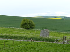 Landscape With Menhir [Explored] (Marit Buelens) Tags: meadow agriculture menhir sarsenstone flowers gate yellow green contrast uk england wiltshire avebury nationaltrust walking fz200 rapeseedfield standingstone