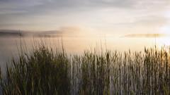 Am Simssee (blichb) Tags: 2018 bayern chiemgau deutschland iphone7 iphoneography nebel rosenheimerland schilf simssee sonne stephanskirchen blichb sonnenaufgang riedering de
