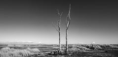 Winton Wetlands (AWLancaster) Tags: blackandwhite monochrome lightroom bw beautiful desolate 7d canon photowalk wetland dry lakebed skyline