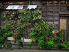 wall gardening (kasa51) Tags: house wooden pottedplant gardening yokohama japan 鉢植え 外壁園芸 alley