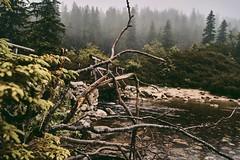 A3693099-E002-44C9-B5AB-8113B3E024E4 (jullietserov) Tags: mountain mountains poland zakopane lake nature forest water fog waterfall rain clouds trees bridge