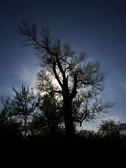hidden sunlight (Darek Drapala) Tags: sun sky silhouette sunset skyskape sunshine sunbeams sunlight sunblink sunny panasonic poland polska panasonicg5 view vistula trees tree lumix light nature natural