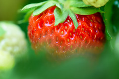 Hidden (cosovan vadim) Tags: strawberry fresh fruit red nature spring leaves nikon d750 tamron 90mm f28 sweet food macro