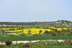 Segarra (esta_ahi) Tags: segarra lleida lérida spain españa испания paisatge paisaje landscape colza brassicanapus flor floración flora yellow