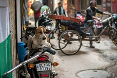 A Dog's Life in Old Delhi (shapeshift) Tags: 50mm18 trishaw parkingpoetry motorcycleparking motorcycle urbananimals citydog cityanimals dog candidphotography streetphotography newdelhi olddelhi delhi davidpham davidphamsf shapeshift shapeshiftnet india in indiastory indiastories