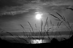 Calmiña/Calm (carlosdeteis.foto) Tags: carlosdeteis galiza galicia blackandwhite brancoenegro blancoynegro