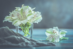 White bouquet (Ro Cafe) Tags: helios58mmf2 peruvianlily stilllife arrangement blooms flowers setup vintagelens whiteflowers bouquet white blue aqua naturallight nikond600