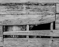 IMGP2156 (agianelo) Tags: garage shed weathered old texture abstract bw blackandwhite