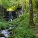 Cascade du Trador. (ricky6379) Tags: cascade waterfall eau water fleurs vert chemin marches falaise auvergne puydedôme massifcentral