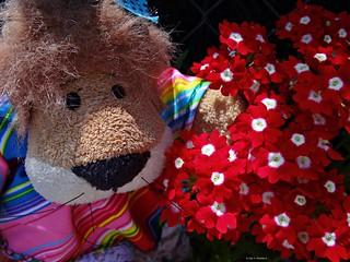 Qué flores tan bonitas!!!!  ¿Estáis de acuerdo, amigos?